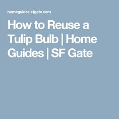 How to Reuse a Tulip Bulb | Home Guides | SF Gate