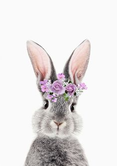 Bunny With Flower Crown Art Print by Lotus Print Studio - X-Small Easter Wallpaper, Animal Wallpaper, Disney Wallpaper, Bunny Art, Cute Bunny, Lama Animal, Desenio Posters, Baby Animals, Cute Animals