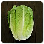 Organic Green Towers Lettuce