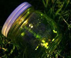 Catching fireflies !!!