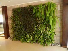 1000 images about plantas para jardines verticales on - Jardines verticales interiores ...