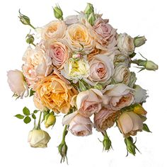 kungahuset.se:  Wedding of Prince Carl Philip of Sweden and Sofia Hellqvist, June 13, 2015-Sofia's bouquet consisted of garden roses in cream and coral and traditional myrtle from Sofiero