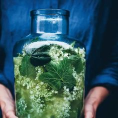 Saft på fläder och svartvinbärsblad | Recept ICA.se Harvest Pictures, Homemade Lemonade, Fika, Wine Drinks, Beverages, Recipes From Heaven, Kombucha, Raw Vegan, Healthy Snacks