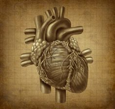 11718543-human-heart-in-old-vintage-grunge-parchement-texture-as-a-medical-symbol-of-the-blood-pumping-cardia.jpg (400×381)