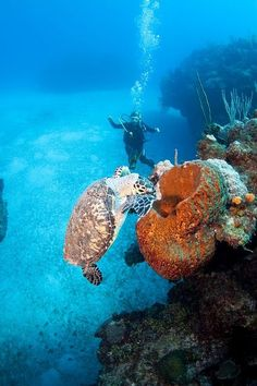 Reef Diving in the Cayman Islands