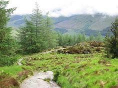 winding paths | Winding path through the forest, passing Crianlarich
