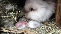 Cutest Bunnies, Cute Baby Bunnies, Animals And Pets, Baby Animals, Animal Humour, Alchemy Symbols, House Rabbit, Adorable Dogs, Poodles