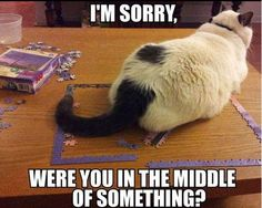Fuuny Cat Memes