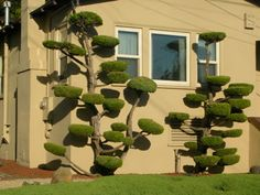 Printer & Piemaker: topiaries