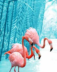 Image result for flamingo tumblr