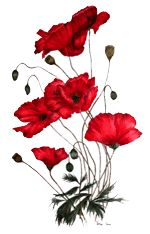 Google Image Result for http://petsandposies.co.uk/images/Poppy-painting.gif