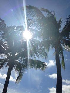 Palm Trees of FL♡♡