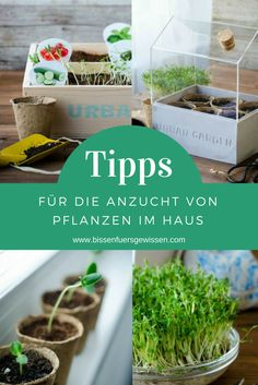 Tipps für die Anzucht von Pflanzen im Haus Tips for growing vegetables in the apartment: Urban Gardening. For more green in the city, on the balcony, in the home. Cheap, simple, sustainable and self-sufficient. Indoor Garden, Indoor Plants, Home And Garden, Herb Garden, Garden Pots, Vegetable Garden, Garden Types, Growing Plants Indoors, Growing Vegetables