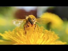 Celebrating World Bee Day 20 May Beekeeping, Bees, Flow, Creatures, World, Day, Youtube, Animals, Beautiful