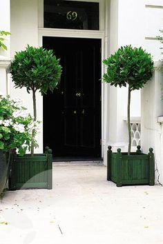Topiary standards and wooden planter boxes/ Idea is to paint planter boxes black and put house number on one box. Topiary Trees, Topiaries, Potted Trees, Porch Topiary, Laurus Nobilis, Wooden Planter Boxes, Enchanted Home, Entrance Doors, Front Doors
