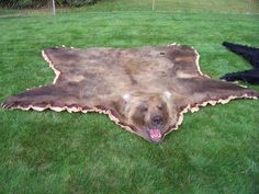 Yes, I actually do want a bear-skin rug.