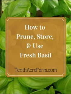 Fresh-cut basil doesn't store well, but this trick will keep basil fresh until you're ready to use it.