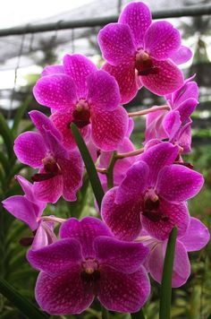 Beautiful orchids of Thailand.