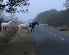 ponies gathering mourn family member