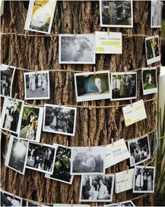 Easy decorating: wrap trees in pictures of bride/groom throughout their relationship