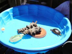 I found a baby RES turtle! This article helps A LOT!  How to Care for a Red Eared Slider Turtle