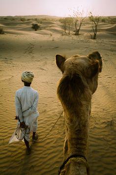 Camel herder, Rajasthan, India