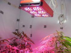 G8LED 240 Watt LED Grow Light Review
