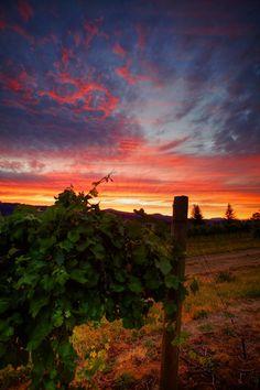 Vineyard Sunset - OGQ Backgrounds HD