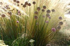 whispsofinvisibleme.tumblr surroundedbybeauty-gardendesign: native plantings