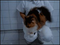 Drumroll please. This is my favourite cat gif of all time.