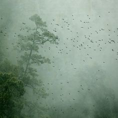 flock of birds in a pale green dream. photo by rosa basurto