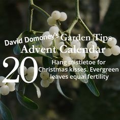 David Domoney's Garden Tips Advent Calendar Day 20
