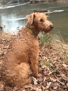 Rory's Broad River hikes