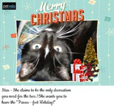 I just created my own holiday e-card featuring my pets and family with Pet Valu's Holiday E-card Creator! Spread the love and make an e-card too!