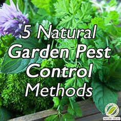 5 Natural Garden Pest Control Methods