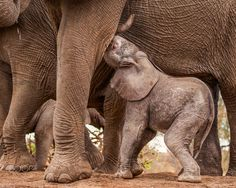 Drinking Ellie by Jaco Marx on 500px