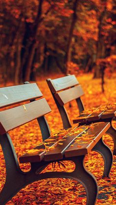 Nature Autumn Fall Leaves On Roadside Bench iPhone 8 Wallpapers Wallpapers Vintage, Vintage Wallpaper Iphone, Ocean Wallpaper, Live Wallpapers, Nature Wallpaper, Phone Wallpapers, First Day Of Autumn, Photos Booth, Mental Training