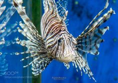 Fish by cesargaviria Underwater Photography Underwater World, Underwater Photography, Fish, Sea, Nature, Animals, Free Shipping, Amazing, Photos