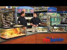 selecting a class pet Classroom Pets, Science Classroom, Classroom Activities, Class Pet, Creative Teaching, Teaching Ideas, Grant Writing, 4th Grade Science, Meet The Teacher