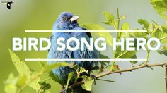 The Cornell Lab of Ornithology's Bird Song Hero | The Kid Should See This