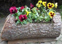 Artesanatos Reciclagem: Tronco de arvore como pequeno jardim de flores