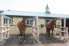 Wingberry Farms A Circuit Hunter Jumper Equestrian Facility King Toronto Ontario