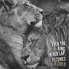 Lion quotes - 56 Short Inspirational Quotes That Will Inspire You (Fast) Infj Quotes, Qoutes, Leo Quotes, Woman Quotes, Quotations, My King Quotes, Lioness Quotes, You Are My King, Lion Couple