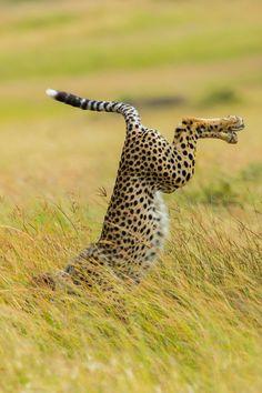 ganadores-premios-fotogradia-comedy-wildlife-2015 (12)