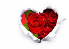 Heart Of Roses Valentine's Day Concept Royalty Free Stock Photos - Image: 7208178