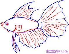 How to Draw a Betta, Step by Step, Fish, Animals, FREE Online ...