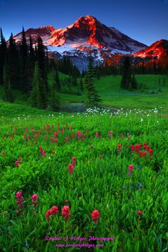 Sunset Wildflowers and Mt Rainier, Mt Rainier National Park, WA Beautiful Photos Of Nature, Amazing Nature, Beautiful Landscapes, Beautiful World, Beautiful Places, Image Nature, Nature Images, Nature Pictures, Nature Nature
