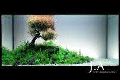 Epheliden - Just Aquascaping