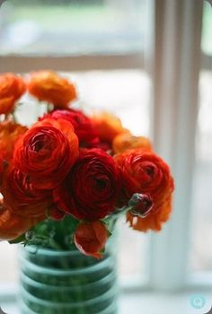 Loving the color of these Ranunculus and the jar!