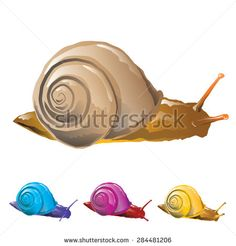 Snail isolated on white background. Vector, illustration. - stock vector